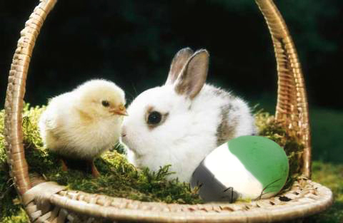 Fescher Osterhase and Young Chick (c) Promill